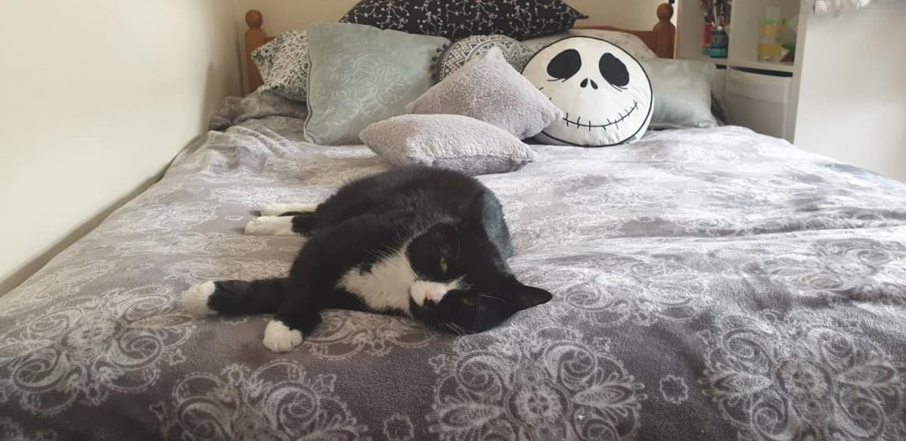 Pet cat (black & white) asleep on mummys bed